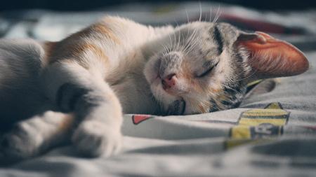 蜗牛睡眠测评1