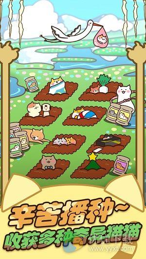 猫咪田园安卓版