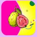 草莓丝瓜芭乐视频安卓版 V1.0