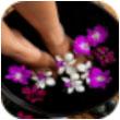 掌上健康养生for iPhone苹果版7.0(健康知识)