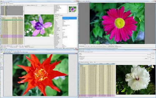 WildBit Viewer 6.2(幻灯片快速浏览编辑器) - 截图1