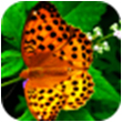 虫虫飞翻翻乐for iPhone苹果版5.1(休闲益智)
