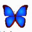 bkViewer 4.9h(照片浏览器)