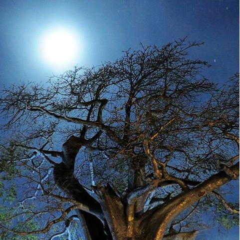 树木唯美意境手机壁纸