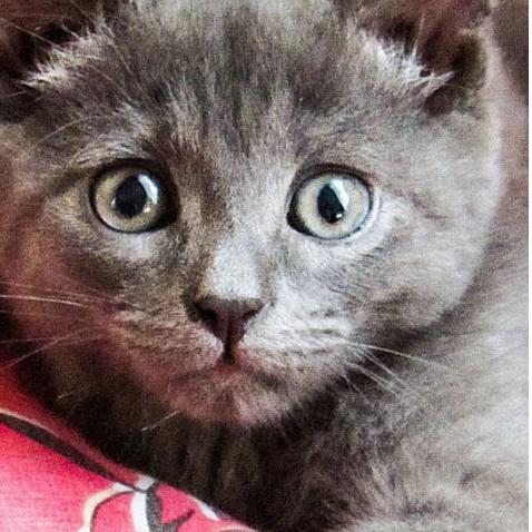 萌猫高清手机壁纸