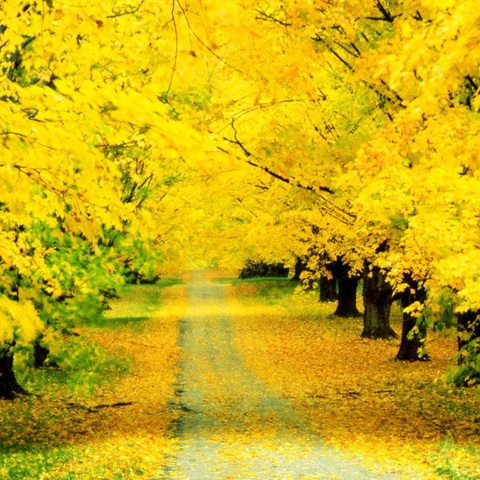 唯美秋景桌面壁纸