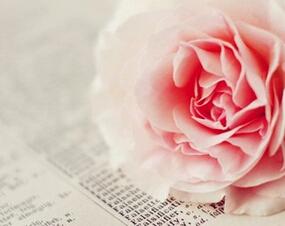 玫瑰桌面高清手机图片