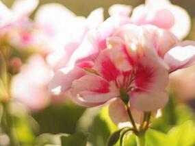 清新植物花卉手机壁纸