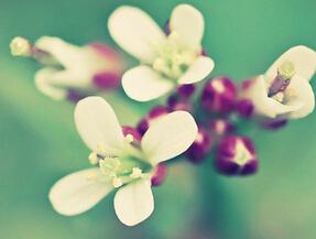 唯美花卉手机壁纸