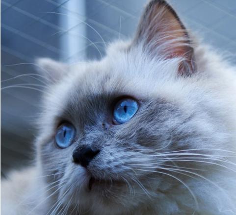 宠物萌猫手机壁纸