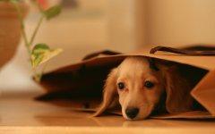 狗狗桌面宽屏壁纸