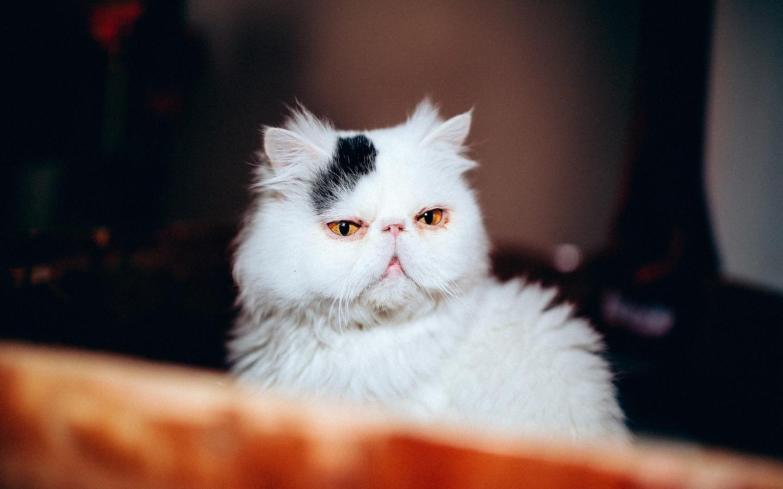 呆萌猫可爱桌面壁纸