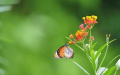 高清蝴蝶桌面壁纸