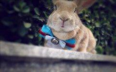 小萌兔子高清桌面壁纸