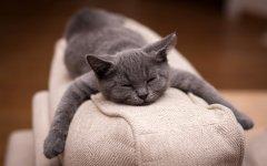 可爱猫咪卖萌桌面壁纸