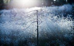 冬季简约自然风景桌面壁纸