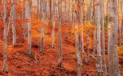 森林唯美风景桌面壁纸