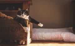 猫咪宝贝可爱桌面壁纸